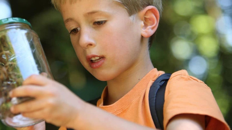 Niño atrapando bichos en un frasco