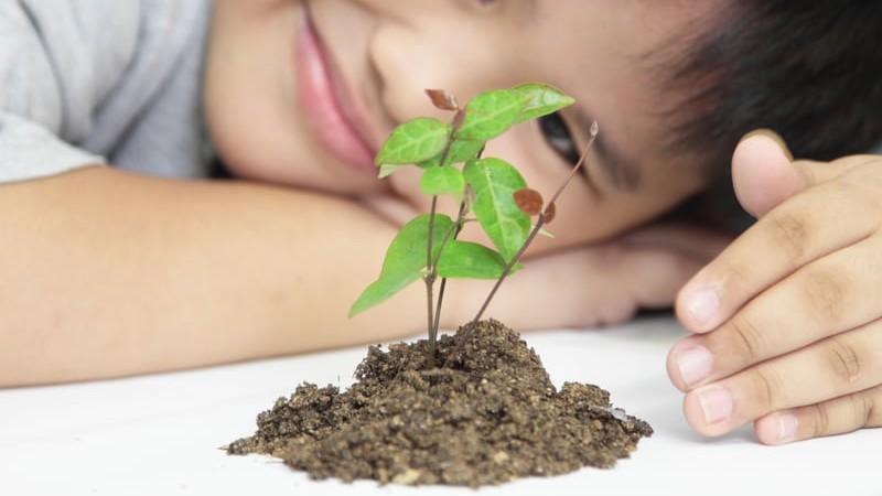 Niño observanso una plantica recien sembrada