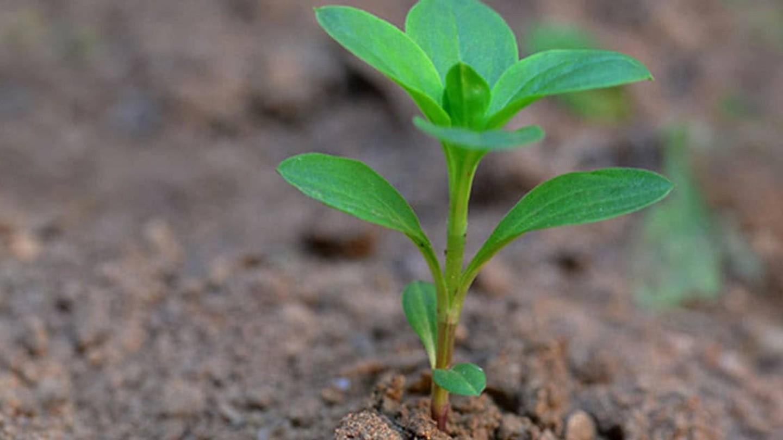 Planta creciendo en la tierra