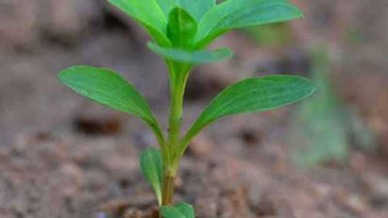 Planta en el suelo